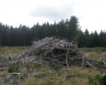 http://simonlewandowski.co.uk/files/gimgs/th-52_52_woodpile03.jpg
